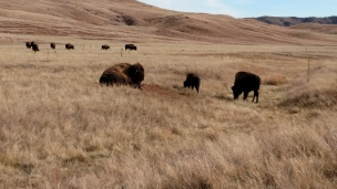 Windcave National Park
